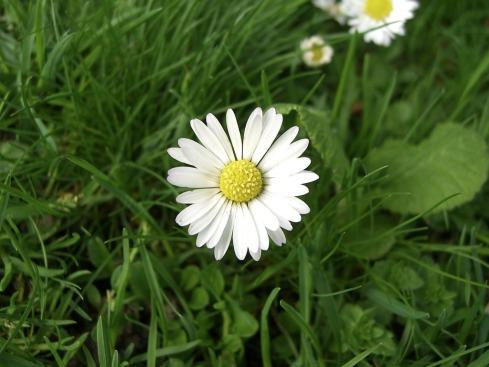 daisy_1024